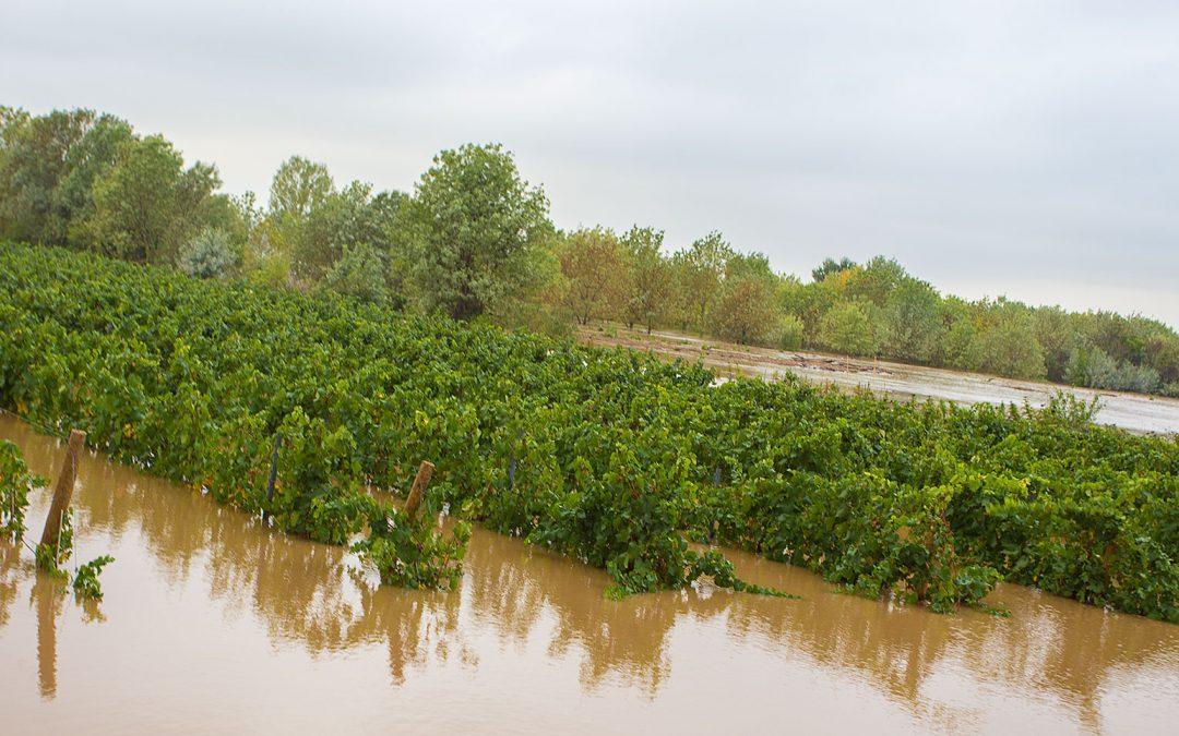 Vendanges in extremis suite aux inondations de l'Hérault à Pézenas