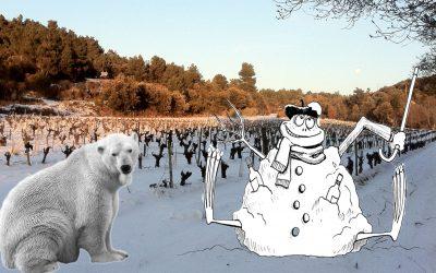Les joies de la vigne en hiver sous la neige